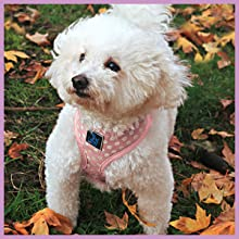 Soft mesh vest dog harness for puppies