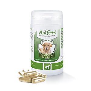 AniForte Tick Shield para Perros (10-35kg) 60 cápsulas. Producto 100% natural. Complejo de Vitamina B que Actúa como Escudo Anti-Garrapatas y ...