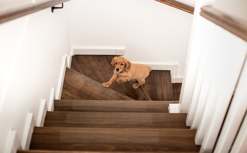 Let the pet trust stairs,  as trusting you.