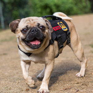 PADDED PET HARNESS