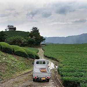 tea farm japan