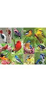 bird puzzle, jigsaw puzzle, outdoor puzzle