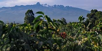 Unroasted Coffee Beans Home Roaster Hawaii Kona Fancy Jamaica Blue Mountain Organic Panama Geisha