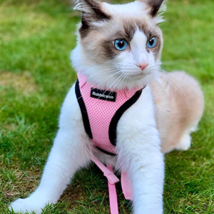 pink cat harness and leash