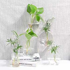 Wall Hanging Glass Plant Terrarium Container
