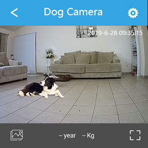 pet treat dispenser with camera