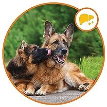 Liver support vitamin for senior dogs omega for dogs dog supplements pet vitamins multivitamin chews