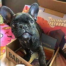 squeaker toys, barkbox, dog chews, dog treats, plush dog toys