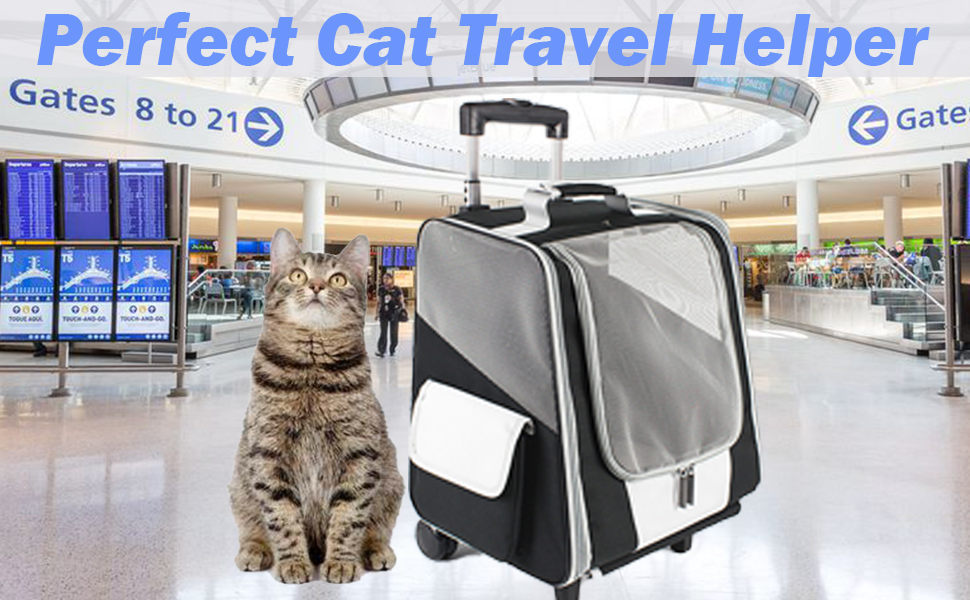 cat airport carrier
