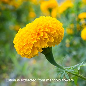 Visifort Eye Vitamins contain Lutein from Marigolds