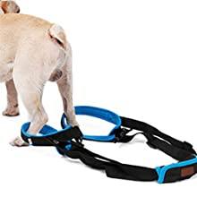 Put in the dog's rear legs