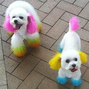 hair chalk comb for dog