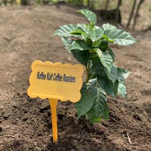Organic Farms, Ethical, Environmental, Equality, Thunderbolt French Roast Coffee, 100% Arabica Beans