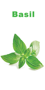 Organic sweet basil seeds for indoor planting - Nature's blossom herbs grow kit for indoor gardening