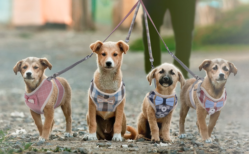 dog harness with leash set