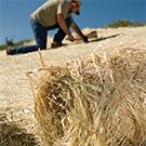 erosion blanket,grass seed blanket,curlex,dewitt,ez straw,germination,seed blanket,straw blanket