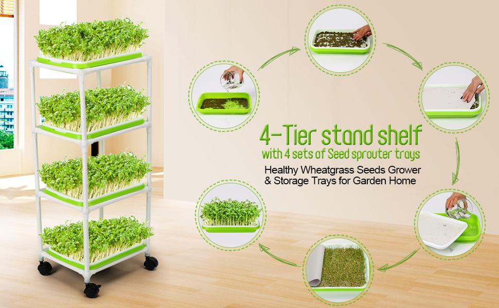 wheatgrass seeds microgreens growing trays sprouting tray microgreen seeds sprouting seeds
