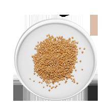 curcuma longa ingredient
