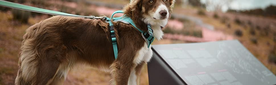 harness for large dogs, easy walk harness, ruffwear harness, dog harnesses for small dogs