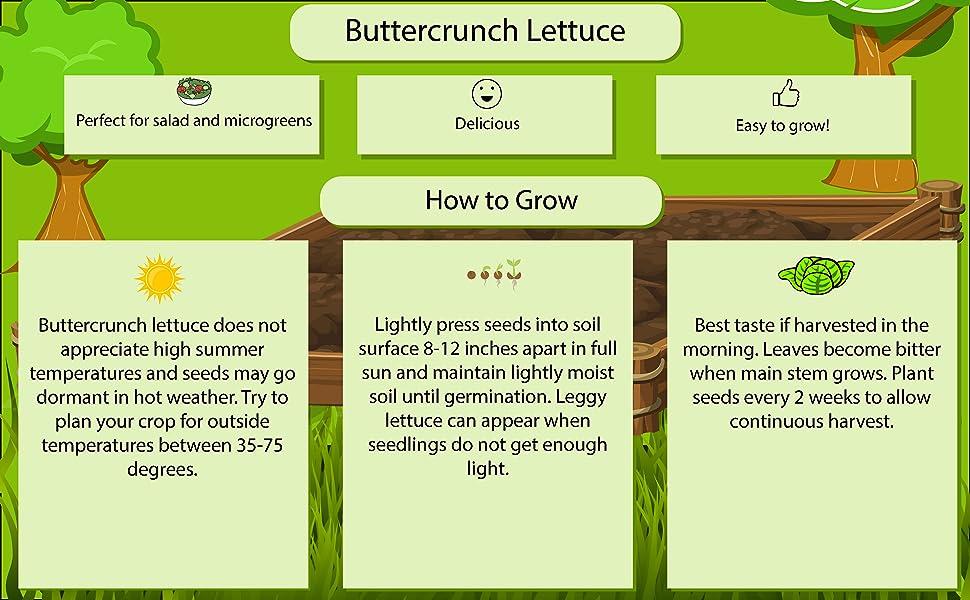 Buttercrunch Infographic