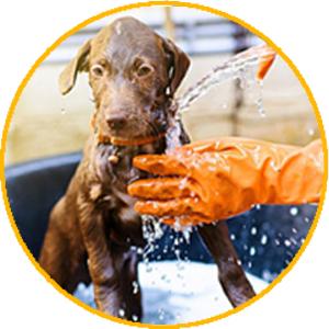 clean pet tool