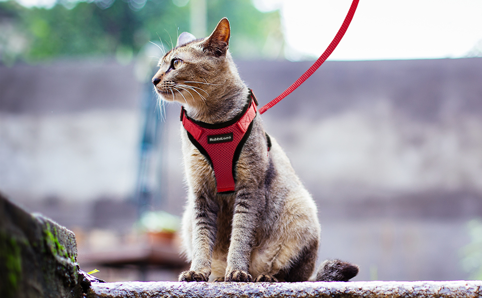 FeiLuo Cat Harness and 150cm Leash Set for Walking Escape Proof Puppies Pink, L Soft Mesh Kitten Vest Harness Reflective Ajustable Breathable Harnesses Perfect for Small Medium Dogs Rabbits