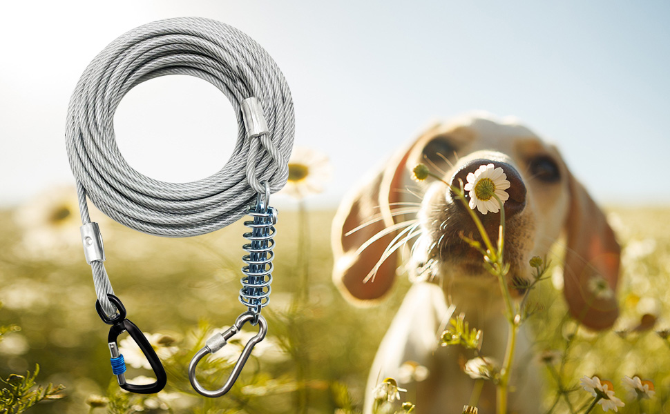 dog tie out cable with shock absorbing spring