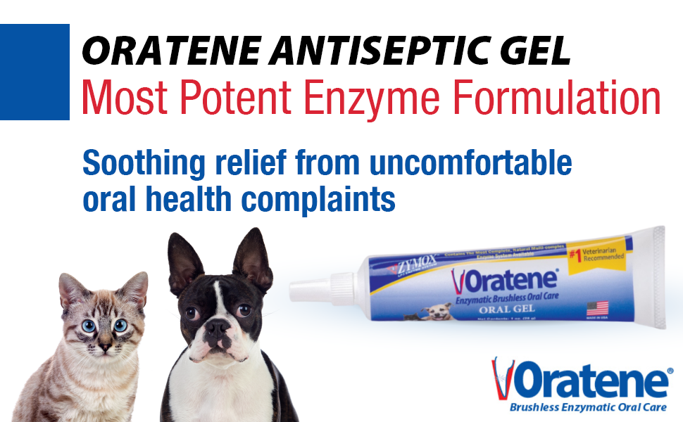 Enzymatic Toothpaste for Dogs and Cats, Look After Your Pet's Dental Hygiene