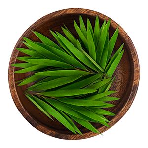 الشاي الأخضر القيقب Holistics