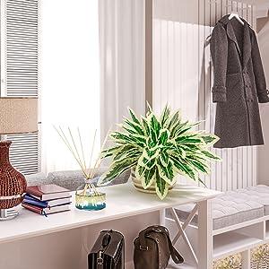 reed diffuser lavender alora oorja sohum cocodor scented oil diffuser scented sticks foyer entryway