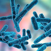 bacillus coagulans lactobacillus acidophilus intestine flora postbiotics immune health cognitive
