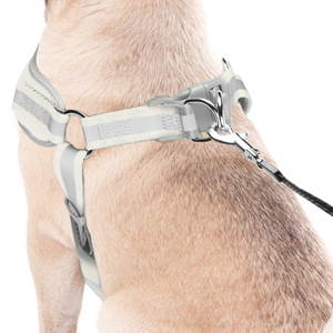Adjust the chest size and clip leash on the double D ring