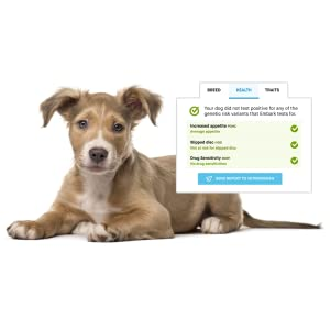 canine health risks, dog health test, mdr1, glaucoma, hip dysplasia, genetic health test for dogs