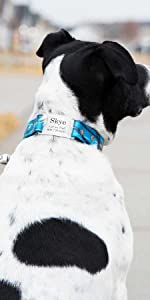 Personalized Camo Waterproof Dog Collar Custom, Durable, Adjustable, Odor Resistant, Safe, Engraved