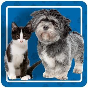cat diabetic diabetes for cats diabetes medication for cats diabetic cat insulin diabetic cat