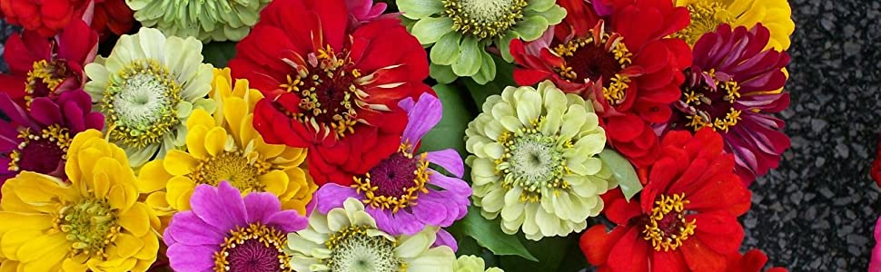 zinnia seeds for planting in the garden flower seeds heirloom seeds quality seeds california giants