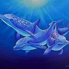 Delphin Magie Web