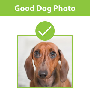 Good Dog Photo