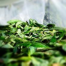 Avocado Leaves Drying