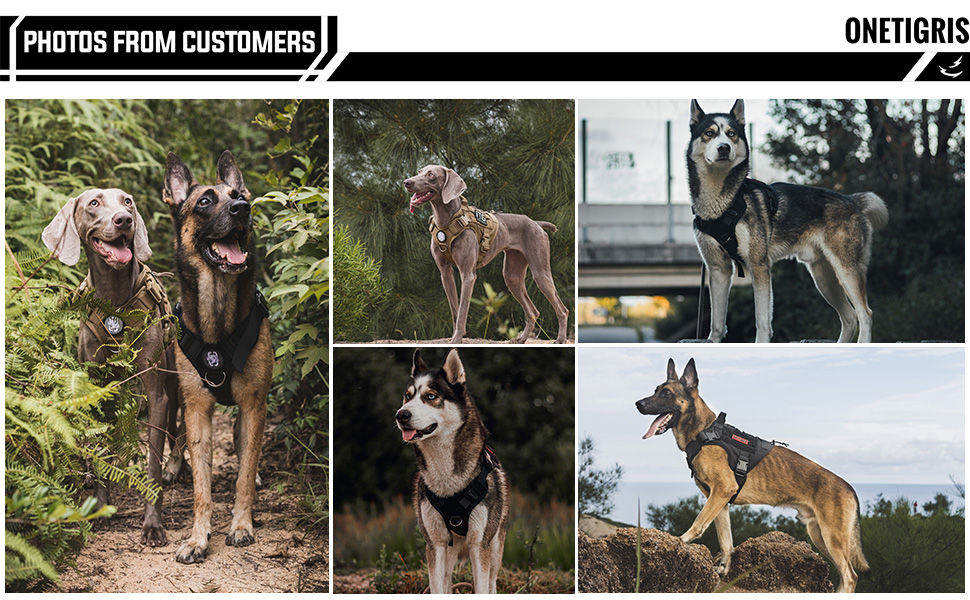 Full body tactical dog harness