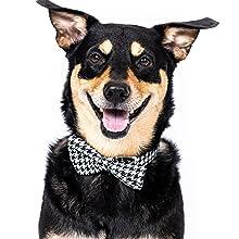 lurcher sliding woven elegant corgi, weiner, cane corso, lab,  terrier, frenchie, french bulldog