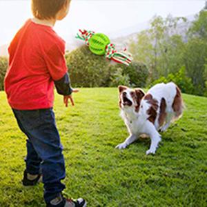 Interactive dog ball