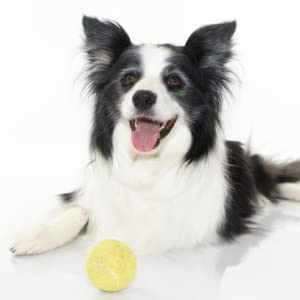 xxl pack of 24 yellow soft tennis balls with giant carrying net ideal for starter//semi-pro or kids practice matches on clay courts or for playing with your dog//puppy non-toxic for dogs.