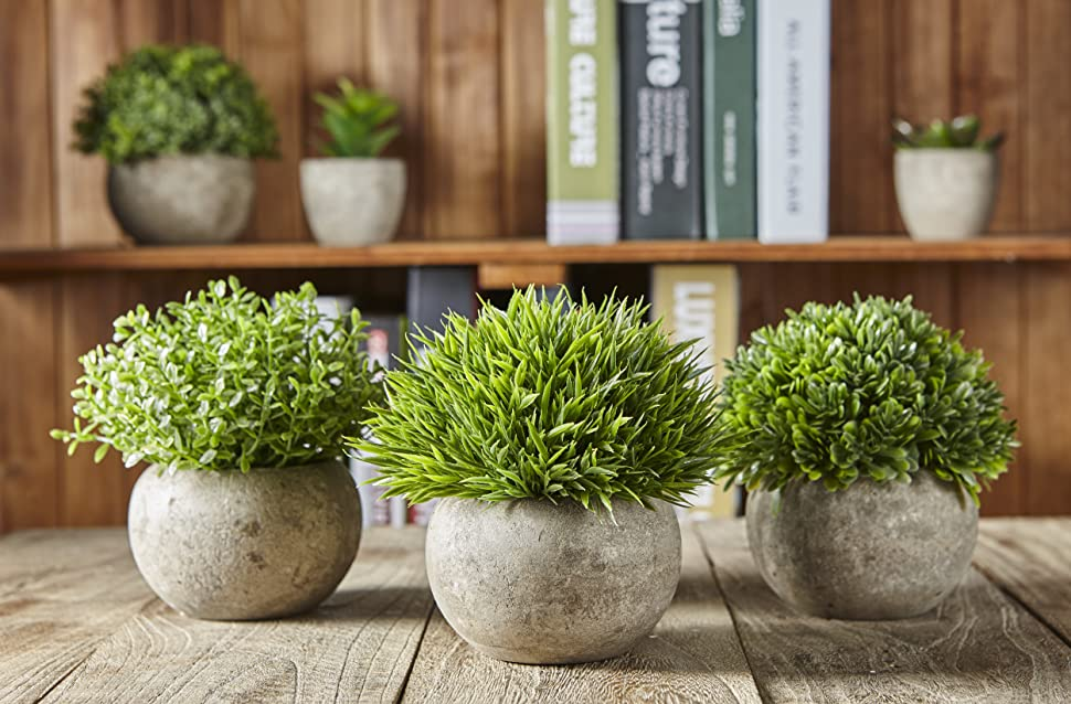 Decorate room,add natural green to your life