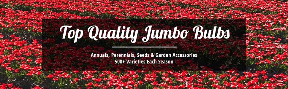 Top Quality Jumbo Bulbs