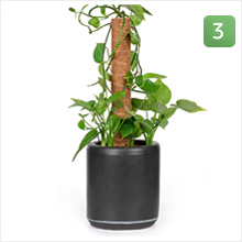 Watch your plant as it grows taller and happier :)