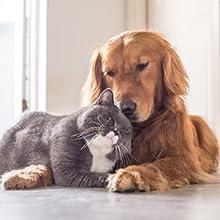 for pets measurement