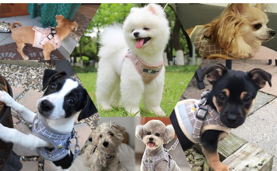 fit for small dogs puppy cats