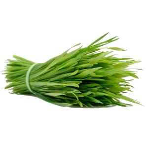Wheat Grass Leaves