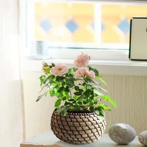 joyMerit Round Desktop Seagrass Obstkorb Woven Kleinigkeiten Boxen L